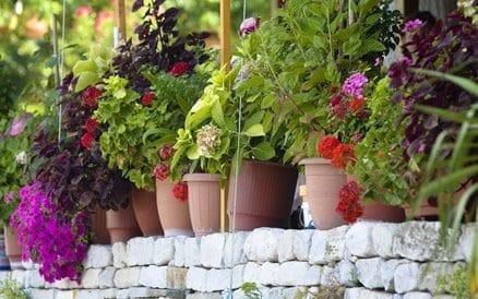 Tuinaanleg: Design of liever klassiek. Netjes of wild? Vele mogelijkheden om accenten in uw tuin aan te brengen.