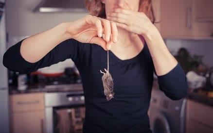 Muizen in voorraadkasten, keukens, schuren en spouwmuren zijn een bron van overlast en lastig zelf te bestrijden.