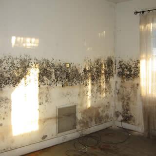 Schimmel op muren, vloer of plafonds is een duidelijk teken van vochtproblemen. Vochtbestrijding en vochtwering zijn essentieel om uitbreiding te voorkomen.