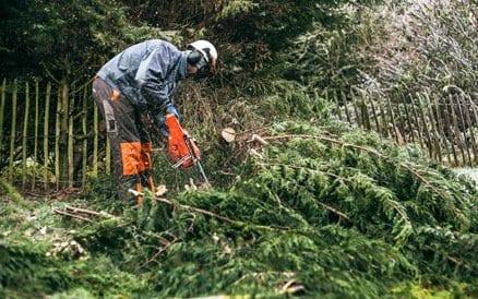 Snoeiwerk van dood en overtollig hout is een belangrijk onderdeel van tuinrenovatie.
