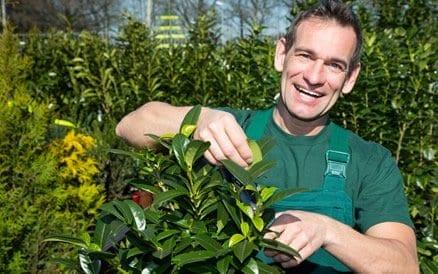 De hovenier doet niet alleen de aanleg van de tuin, maar adviseert en levert planten, bomen en struiken goedkoper dan een tuincentrum.